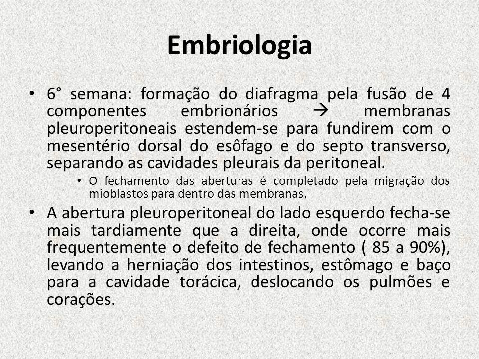 Embriologia 6° semana: formação do diafragma pela fusão de 4 componentes embrionários membranas pleuroperitoneais estendem-se para fundirem com o mese