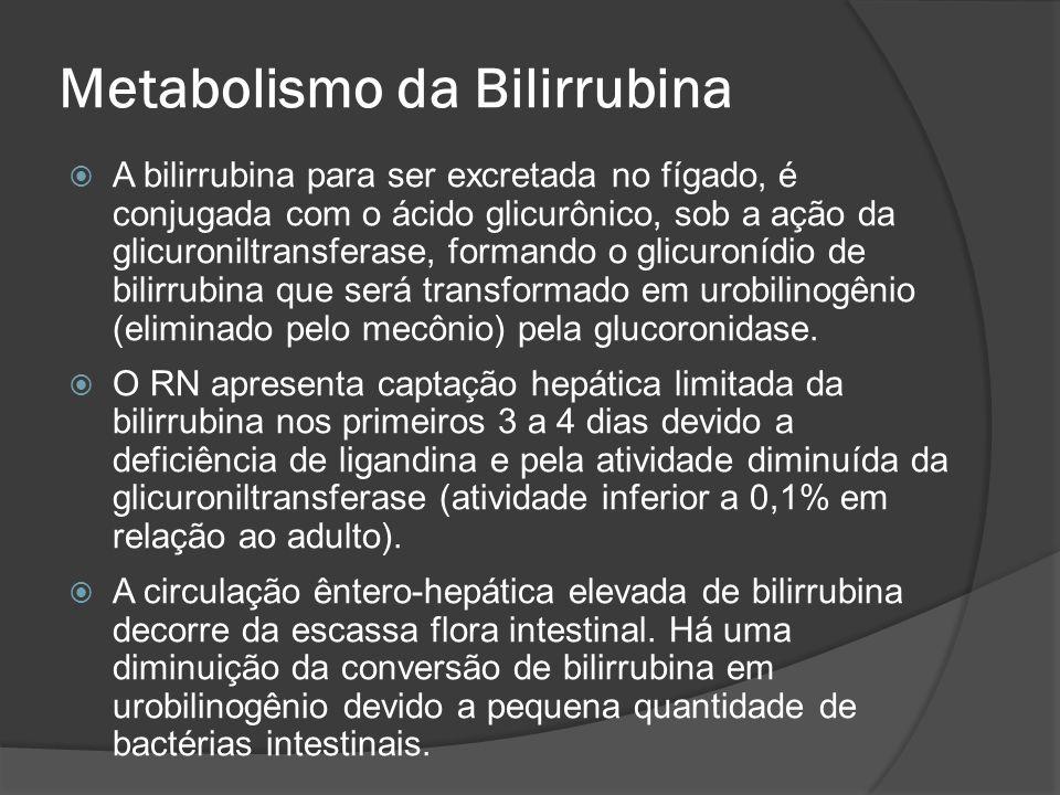 A bilirrubina para ser excretada no fígado, é conjugada com o ácido glicurônico, sob a ação da glicuroniltransferase, formando o glicuronídio de bilir