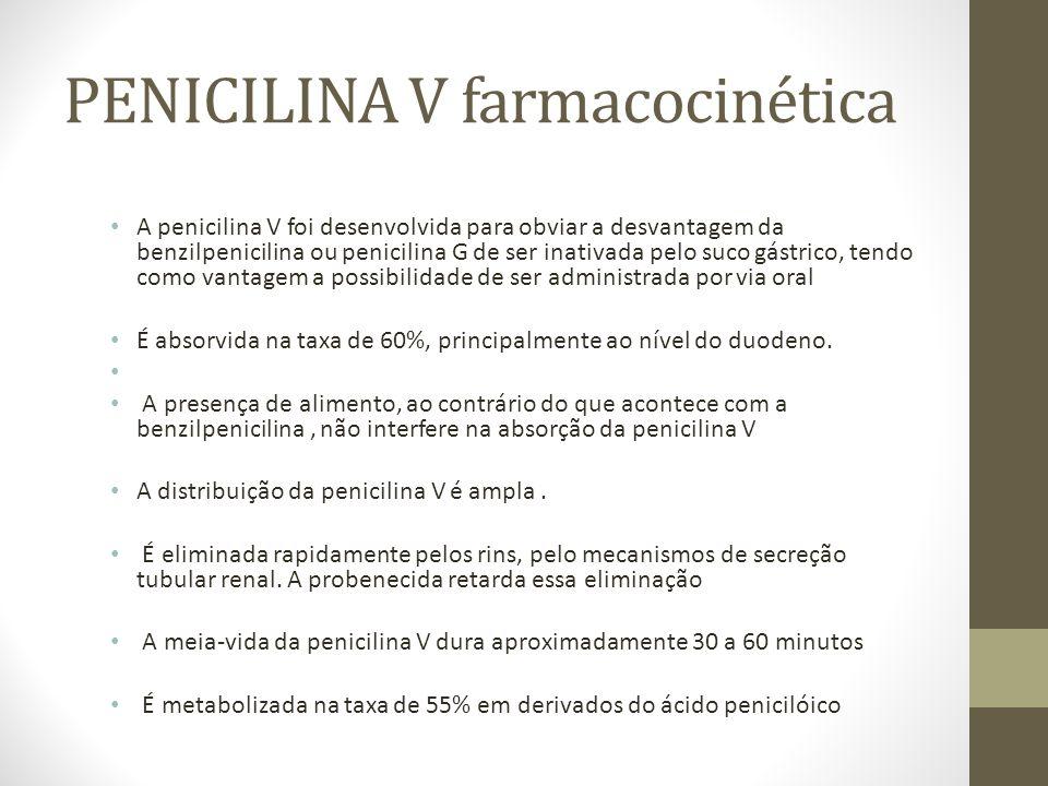 PENICILINA V farmacocinética A penicilina V foi desenvolvida para obviar a desvantagem da benzilpenicilina ou penicilina G de ser inativada pelo suco gástrico, tendo como vantagem a possibilidade de ser administrada por via oral É absorvida na taxa de 60%, principalmente ao nível do duodeno.