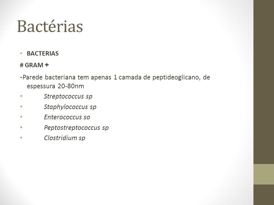 Bactérias BACTERIAS # GRAM + - Parede bacteriana tem apenas 1 camada de peptideoglicano, de espessura 20-80nm Streptococcus sp Staphylococcus sp Enterococcus so Peptostreptococcus sp Clostridium sp