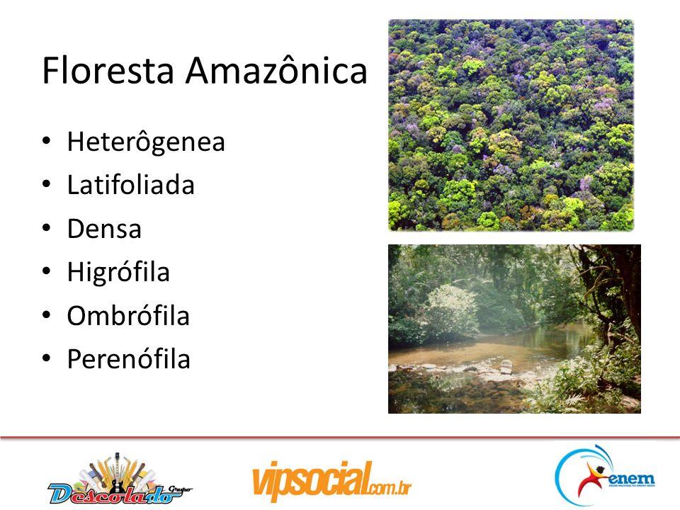 Heterôgenea Latifoliada Densa Higrófila Ombrófila Perenófila Floresta Amazônica