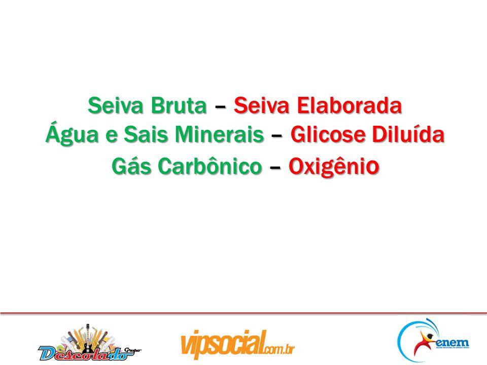 Seiva Bruta – Seiva Elaborada Água e Sais Minerais – Glicose Diluída Gás Carbônico – Oxigêni o