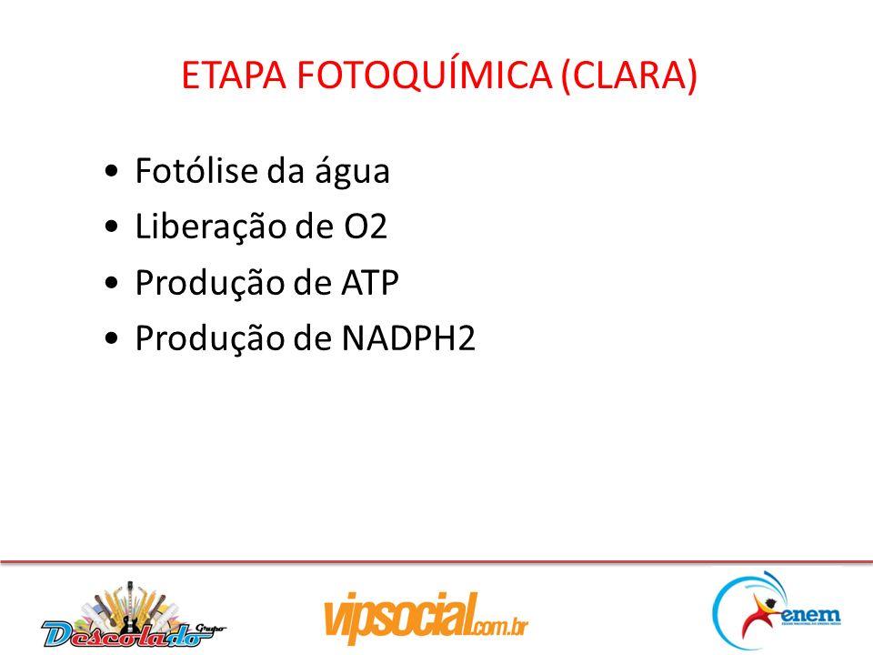 ETAPA FOTOQUÍMICA (CLARA) Fotólise da água Liberação de O2 Produção de ATP Produção de NADPH2