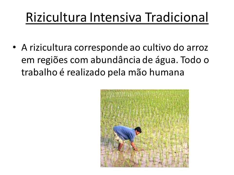 Rizicultura Intensiva Tradicional A rizicultura corresponde ao cultivo do arroz em regiões com abundância de água. Todo o trabalho é realizado pela mã