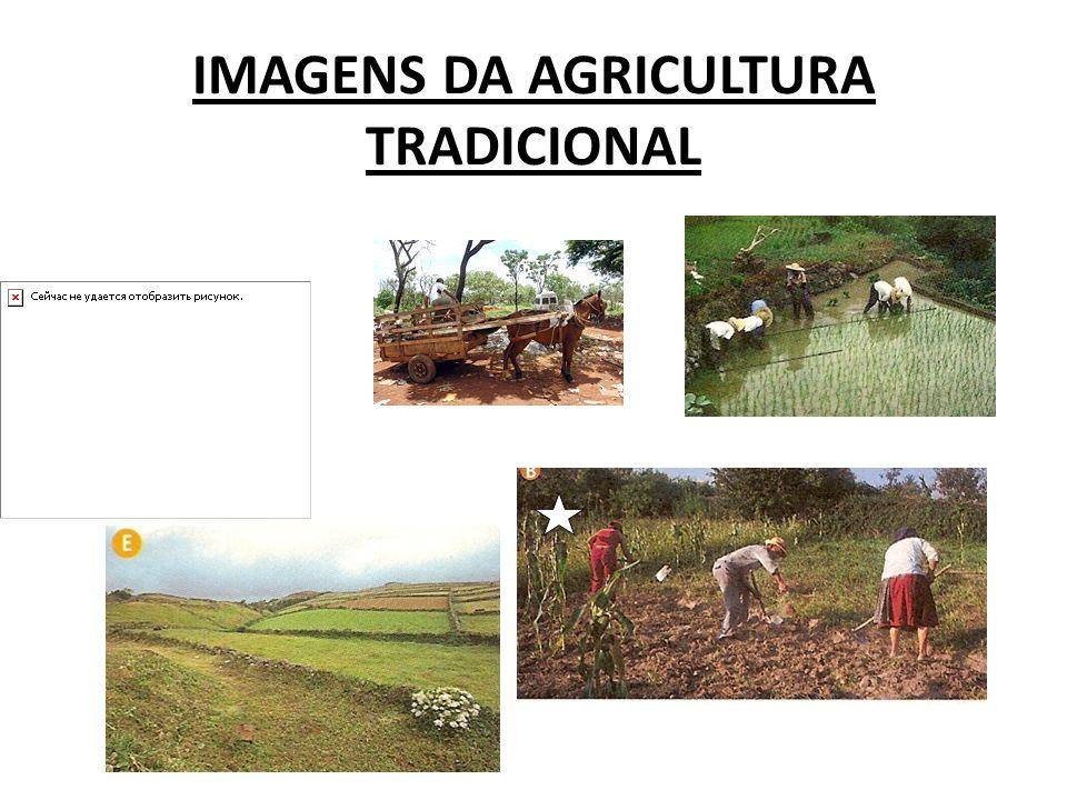 IMAGENS DA AGRICULTURA TRADICIONAL