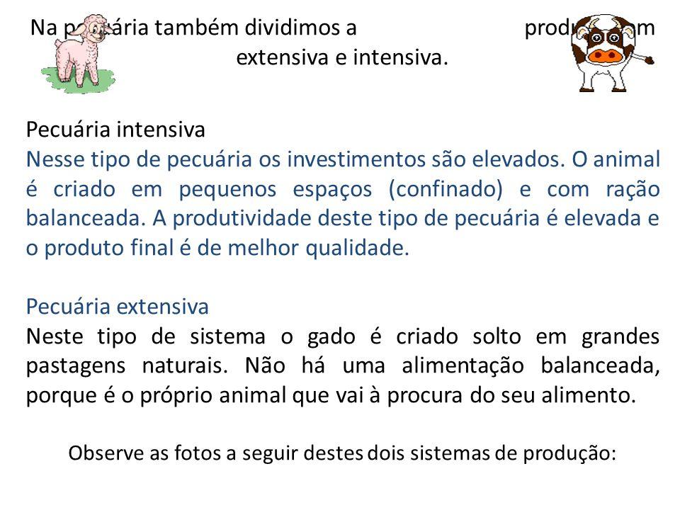 Na pecuária também dividimos a produção em extensiva e intensiva. Pecuária intensiva Nesse tipo de pecuária os investimentos são elevados. O animal é