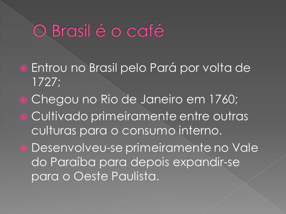 Entrou no Brasil pelo Pará por volta de 1727; Chegou no Rio de Janeiro em 1760; Cultivado primeiramente entre outras culturas para o consumo interno.