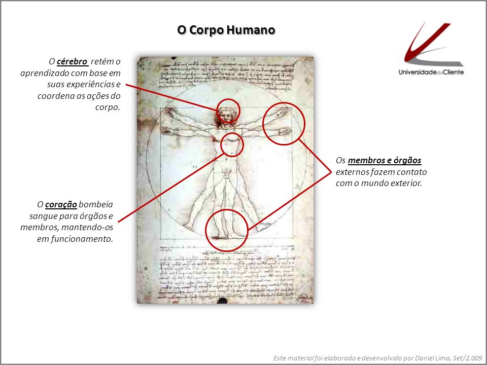 Os membros e órgãos externos fazem contato com o mundo exterior. O coração bombeia sangue para órgãos e membros, mantendo-os em funcionamento. O céreb