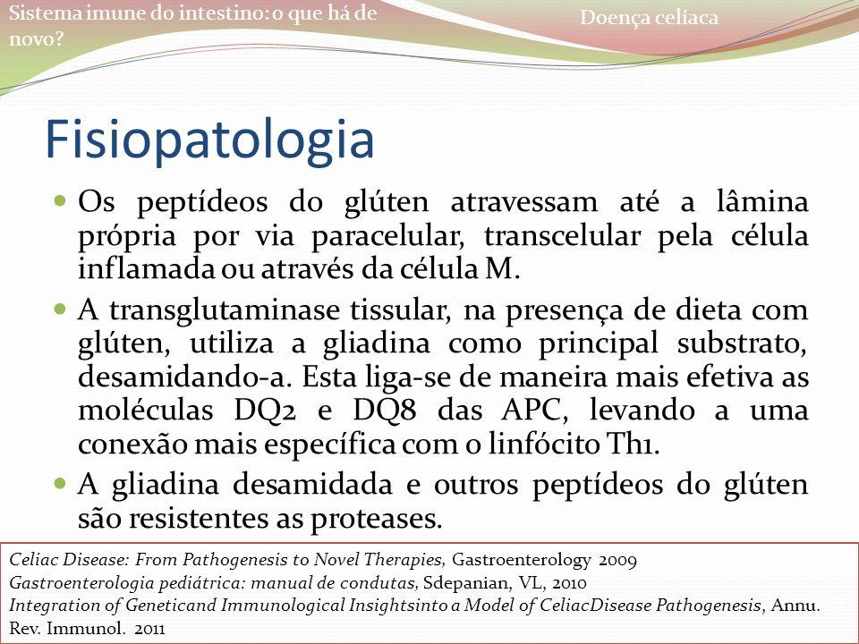 Sistema imune do intestino: o que há de novo? Fisiopatologia Os peptídeos do glúten atravessam até a lâmina própria por via paracelular, transcelular