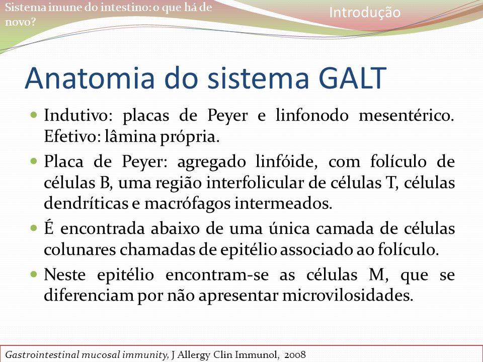 Sistema imune do intestino: o que há de novo? Anatomia do sistema GALT Indutivo: placas de Peyer e linfonodo mesentérico. Efetivo: lâmina própria. Pla