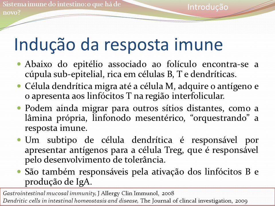Sistema imune do intestino: o que há de novo? Indução da resposta imune Abaixo do epitélio associado ao folículo encontra-se a cúpula sub-epitelial, r