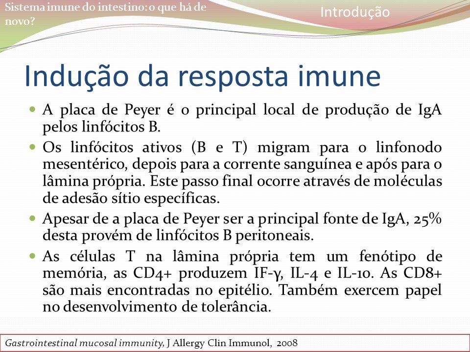 Sistema imune do intestino: o que há de novo? Indução da resposta imune A placa de Peyer é o principal local de produção de IgA pelos linfócitos B. Os
