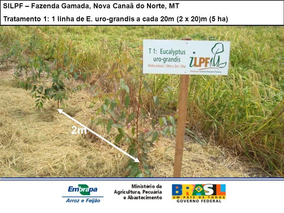 SILPF – Fazenda Gamada, Nova Canaã do Norte, MT Tratamento 1: 1 linha de E. uro-grandis a cada 20m (2 x 20)m (5 ha) 2m
