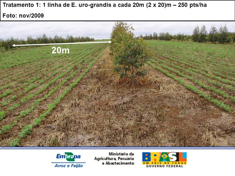 Tratamento 1: 1 linha de E. uro-grandis a cada 20m (2 x 20)m – 250 pts/ha Foto: nov/2009 20m