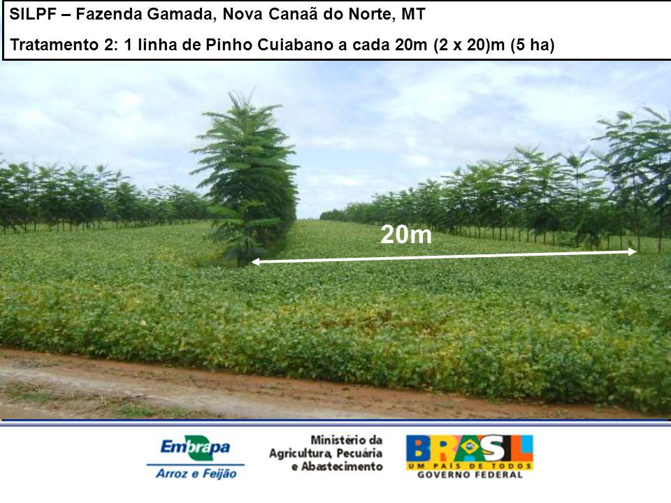 SILPF – Fazenda Gamada, Nova Canaã do Norte, MT Tratamento 2: 1 linha de Pinho Cuiabano a cada 20m (2 x 20)m (5 ha) 20m