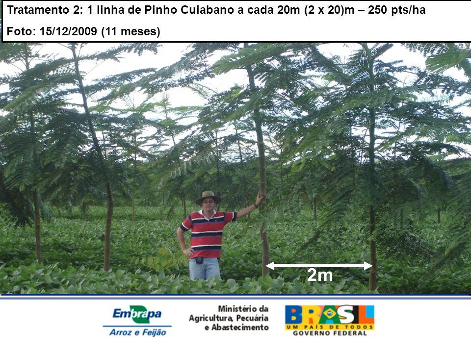 MINISTÉRIO DA AGRICULTURA, PECUÁRIA E ABASTECIMENTO Tratamento 2: 1 linha de Pinho Cuiabano a cada 20m (2 x 20)m – 250 pts/ha Foto: 15/12/2009 (11 mes