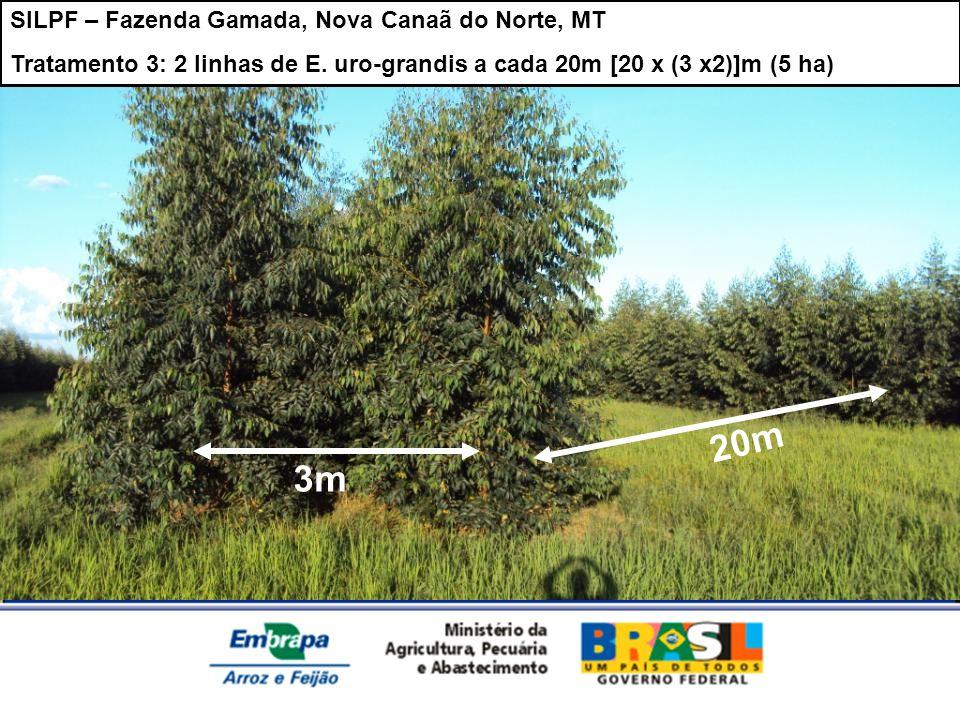 SILPF – Fazenda Gamada, Nova Canaã do Norte, MT Tratamento 3: 2 linhas de E. uro-grandis a cada 20m [20 x (3 x2)]m (5 ha) 20m 3m