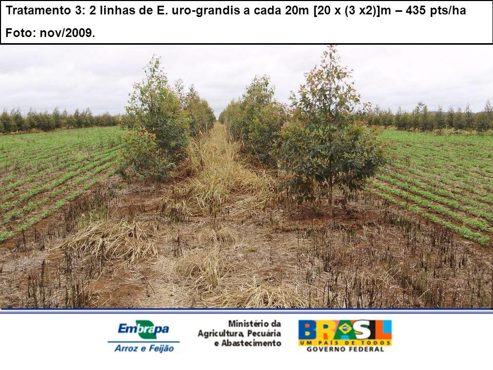 Tratamento 3: 2 linhas de E. uro-grandis a cada 20m [20 x (3 x2)]m – 435 pts/ha Foto: nov/2009.