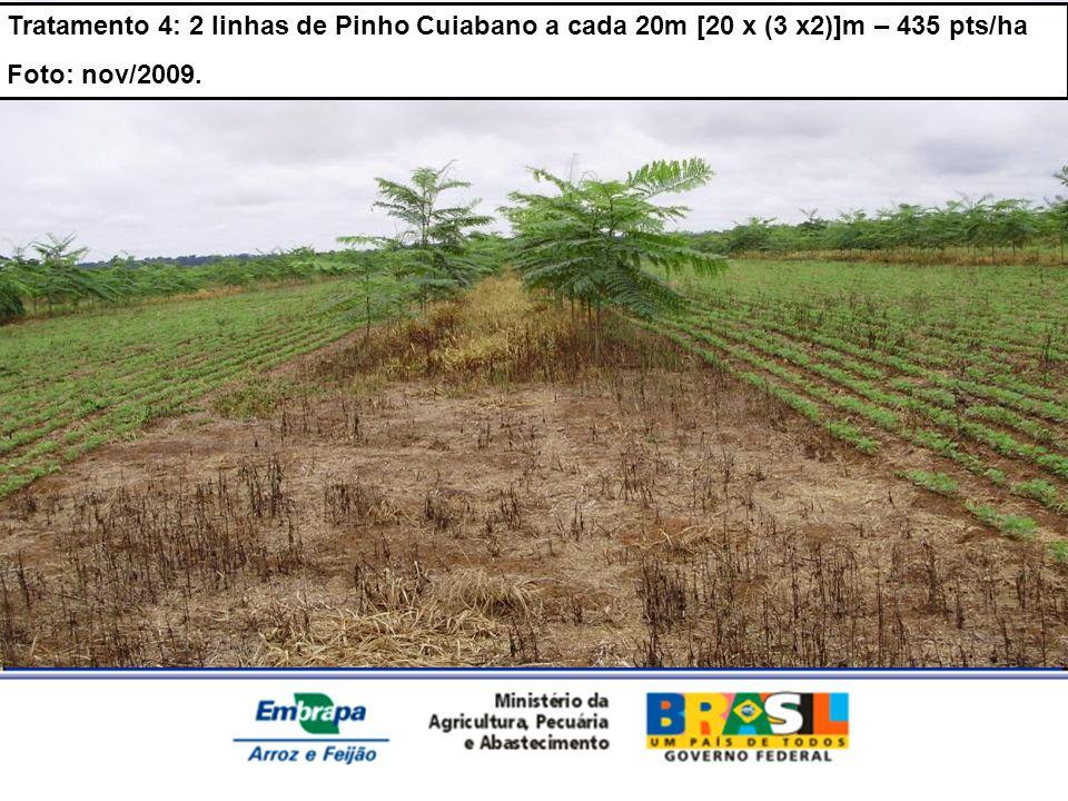 Tratamento 4: 2 linhas de Pinho Cuiabano a cada 20m [20 x (3 x2)]m – 435 pts/ha Foto: nov/2009.