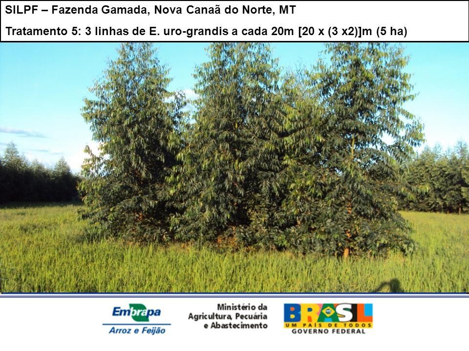 SILPF – Fazenda Gamada, Nova Canaã do Norte, MT Tratamento 5: 3 linhas de E. uro-grandis a cada 20m [20 x (3 x2)]m (5 ha)