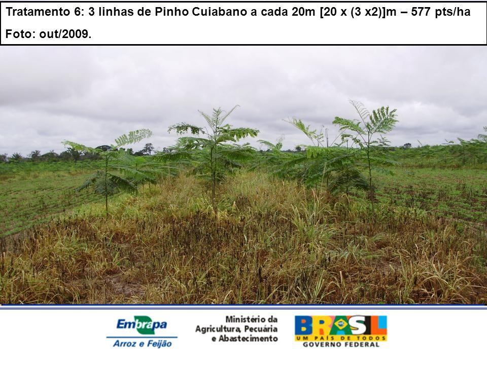 Tratamento 6: 3 linhas de Pinho Cuiabano a cada 20m [20 x (3 x2)]m – 577 pts/ha Foto: out/2009.