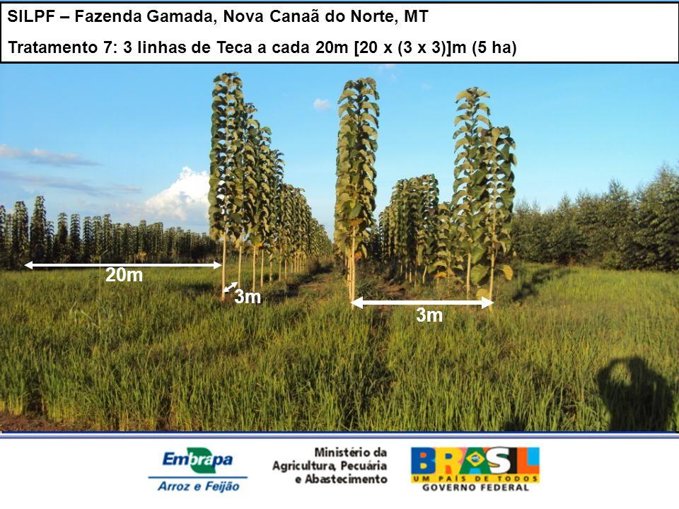 SILPF – Fazenda Gamada, Nova Canaã do Norte, MT Tratamento 7: 3 linhas de Teca a cada 20m [20 x (3 x 3)]m (5 ha) 3m 20m