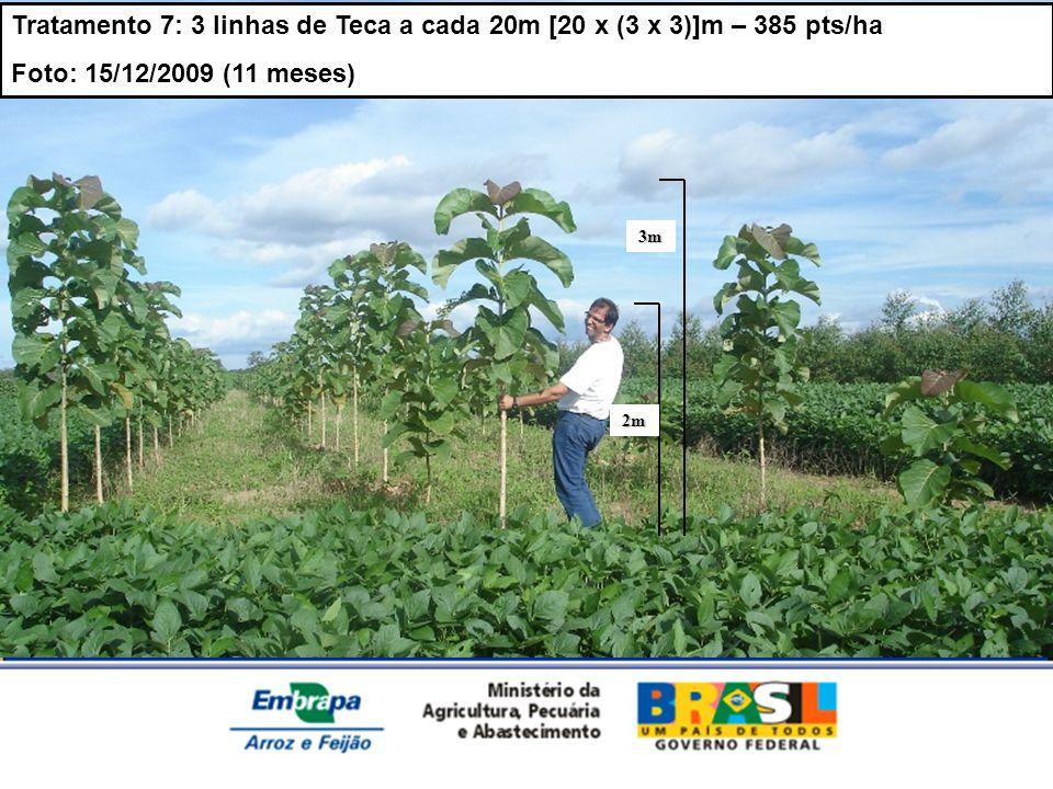 MINISTÉRIO DA AGRICULTURA, PECUÁRIA E ABASTECIMENTO 3m 2m Tratamento 7: 3 linhas de Teca a cada 20m [20 x (3 x 3)]m – 385 pts/ha Foto: 15/12/2009 (11