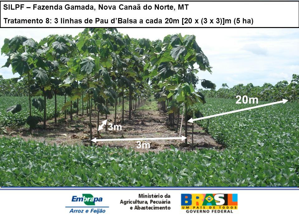 SILPF – Fazenda Gamada, Nova Canaã do Norte, MT Tratamento 8: 3 linhas de Pau dBalsa a cada 20m [20 x (3 x 3)]m (5 ha) 20m 3m