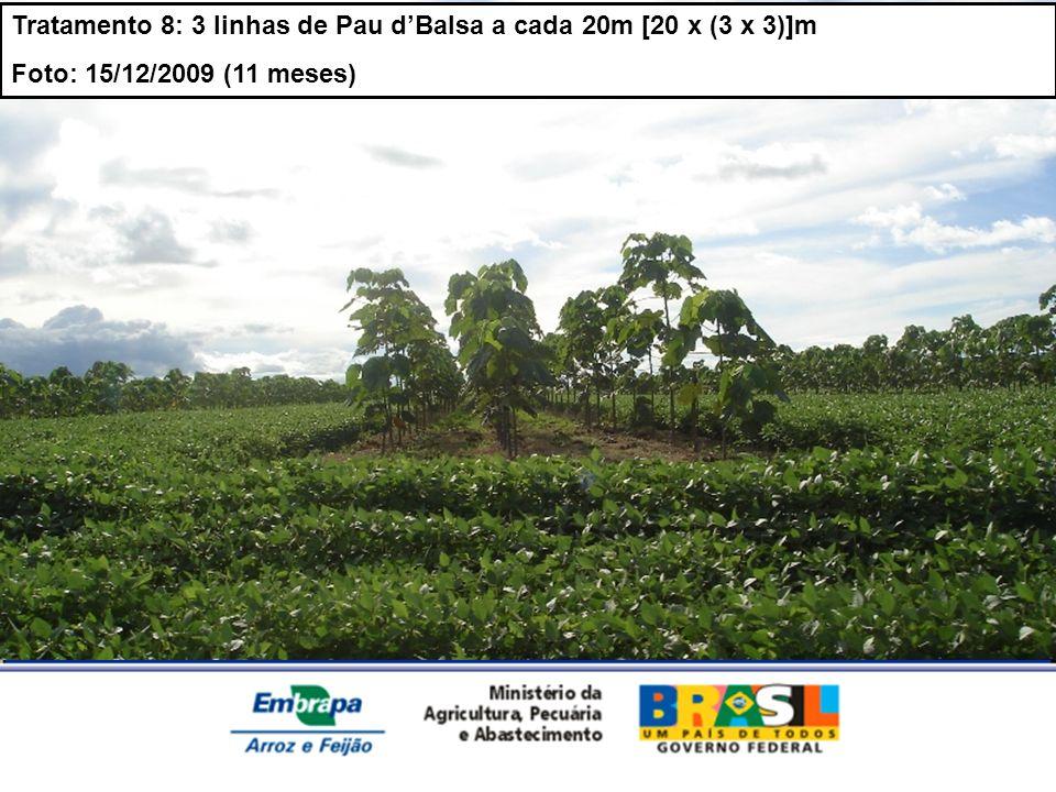 MINISTÉRIO DA AGRICULTURA, PECUÁRIA E ABASTECIMENTO Tratamento 8: 3 linhas de Pau dBalsa a cada 20m [20 x (3 x 3)]m Foto: 15/12/2009 (11 meses)