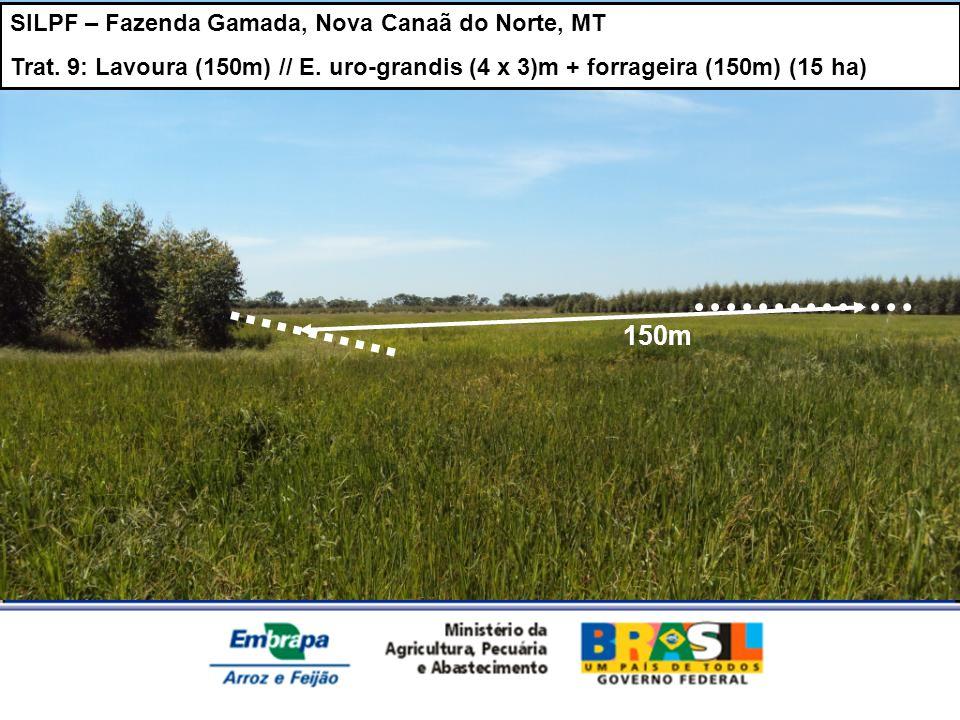 SILPF – Fazenda Gamada, Nova Canaã do Norte, MT Trat. 9: Lavoura (150m) // E. uro-grandis (4 x 3)m + forrageira (150m) (15 ha) 150m