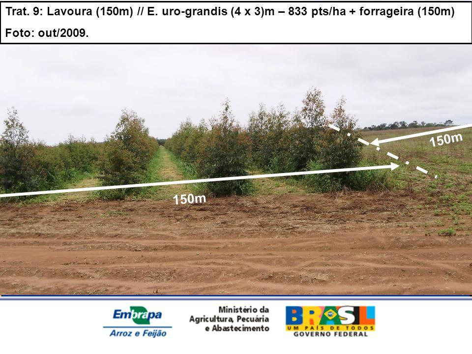 Trat. 9: Lavoura (150m) // E. uro-grandis (4 x 3)m – 833 pts/ha + forrageira (150m) Foto: out/2009. 150m