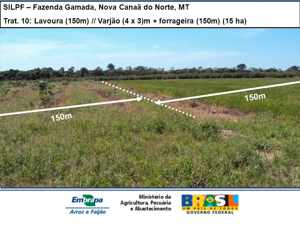 SILPF – Fazenda Gamada, Nova Canaã do Norte, MT Trat. 10: Lavoura (150m) // Varjão (4 x 3)m + forrageira (150m) (15 ha) 150m