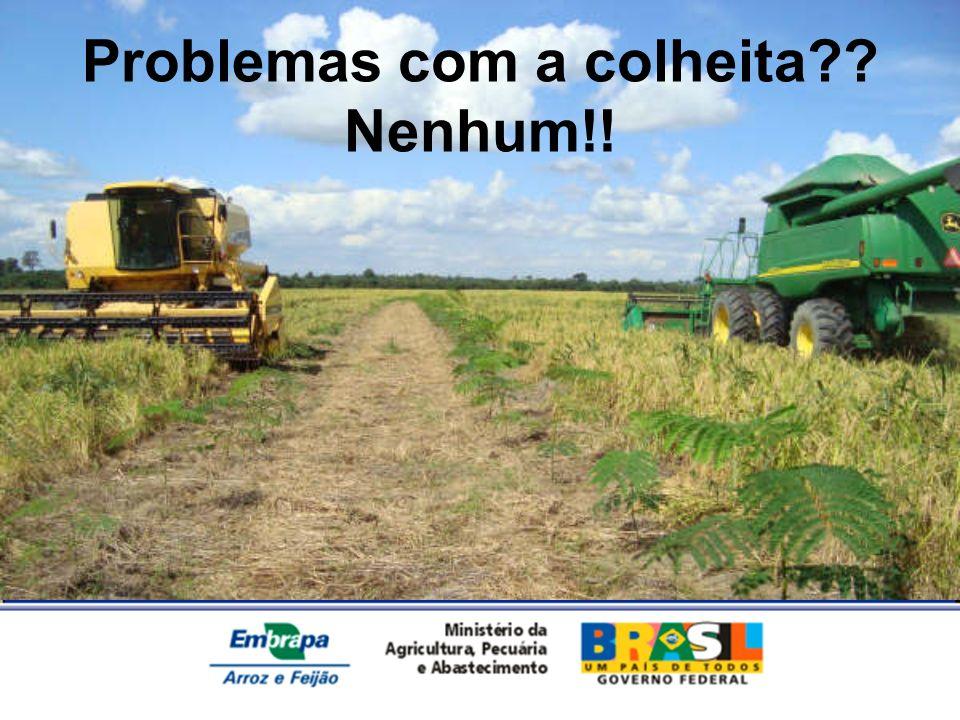 Problemas com a colheita?? Nenhum!!