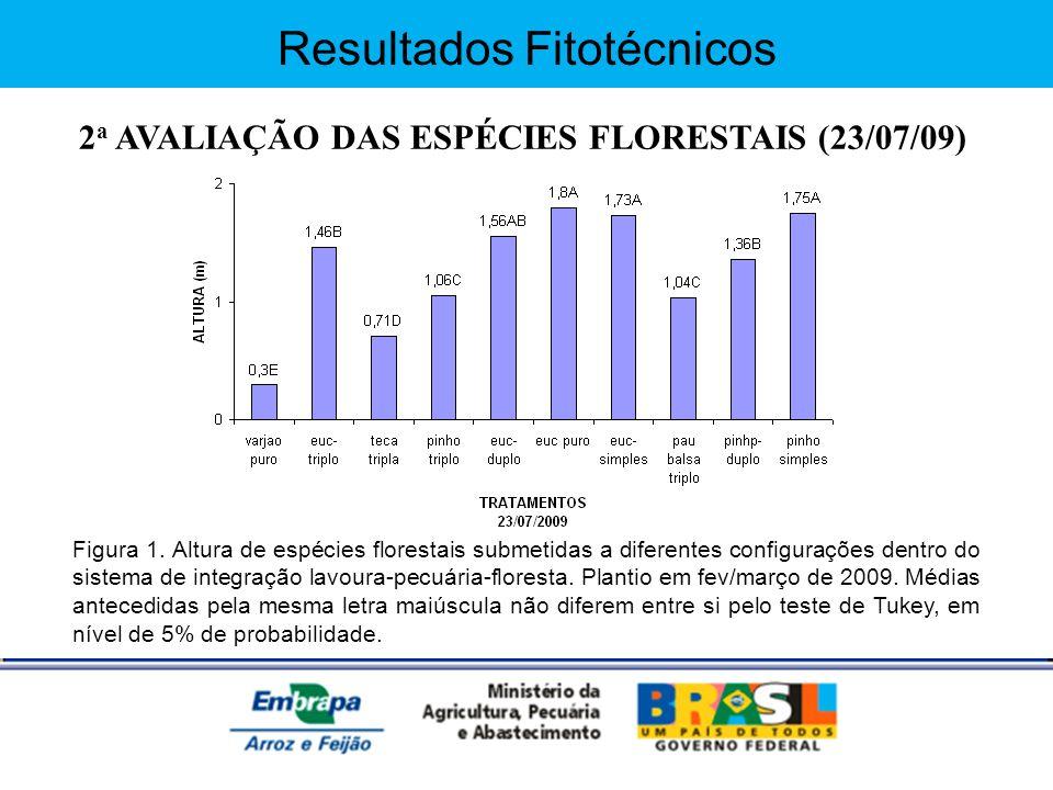 Resultados Fitotécnicos 2 a AVALIAÇÃO DAS ESPÉCIES FLORESTAIS (23/07/09) Figura 1. Altura de espécies florestais submetidas a diferentes configurações