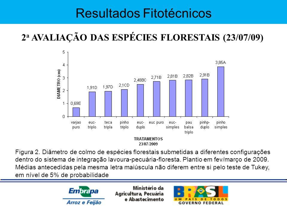 Resultados Fitotécnicos 2 a AVALIAÇÃO DAS ESPÉCIES FLORESTAIS (23/07/09) Figura 2. Diâmetro de colmo de espécies florestais submetidas a diferentes co