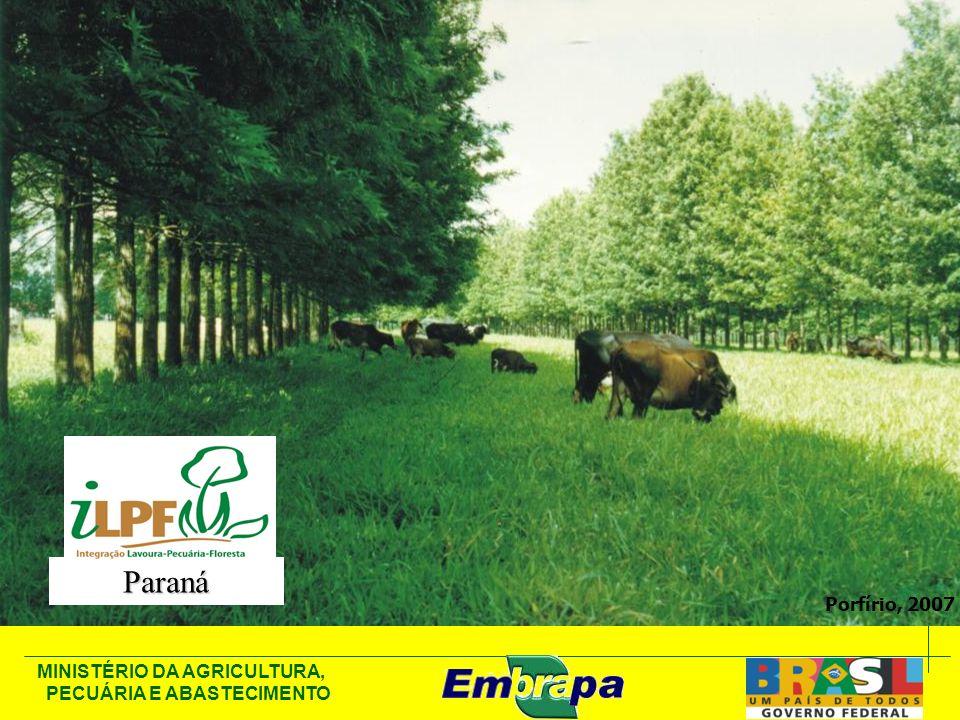 MINISTÉRIO DA AGRICULTURA, PECUÁRIA E ABASTECIMENTO Porfírio, 2007 Paraná