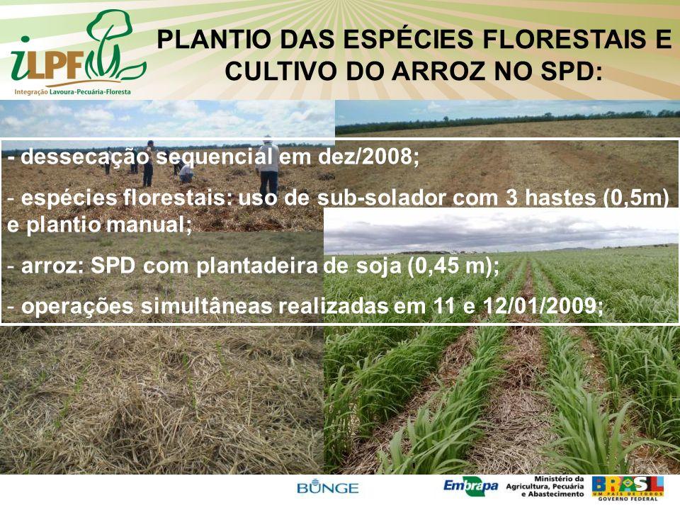 PLANTIO DAS ESPÉCIES FLORESTAIS E CULTIVO DO ARROZ NO SPD: - dessecação sequencial em dez/2008; - espécies florestais: uso de sub-solador com 3 hastes
