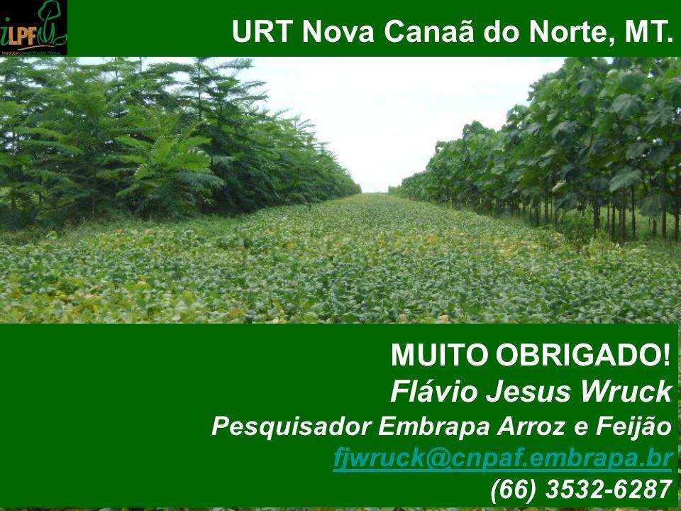 URT Nova Canaã do Norte, MT. MUITO OBRIGADO! Flávio Jesus Wruck Pesquisador Embrapa Arroz e Feijão fjwruck@cnpaf.embrapa.br (66) 3532-6287
