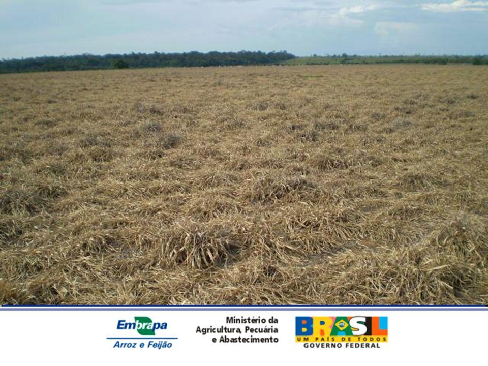 Custo da lavoura de arroz dentro do SILPF, no ano agrícola 2008-09.