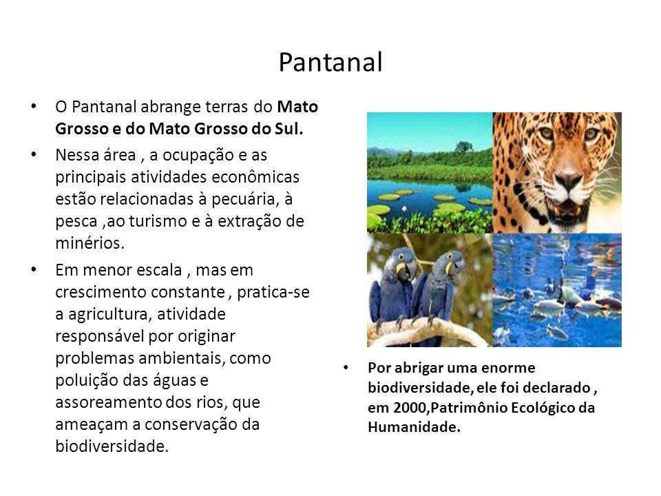Pantanal O Pantanal abrange terras do Mato Grosso e do Mato Grosso do Sul. Nessa área, a ocupação e as principais atividades econômicas estão relacion