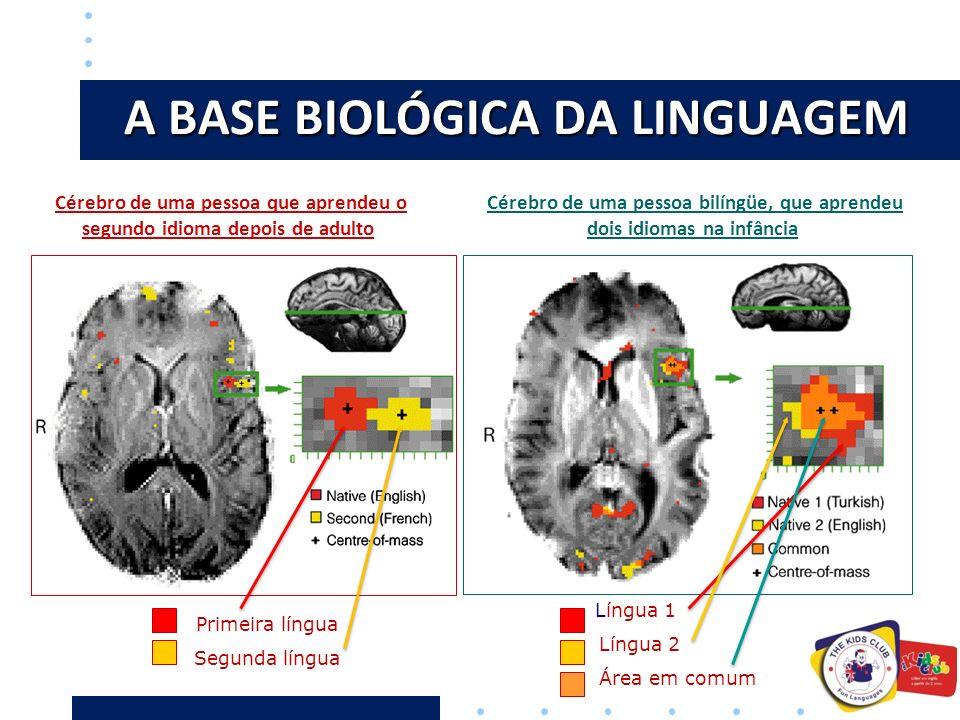 A BASE BIOLÓGICA DA LINGUAGEM Primeira língua Segunda língua Cérebro de uma pessoa que aprendeu o segundo idioma depois de adulto Língua 1 Língua 2 Área em comum Cérebro de uma pessoa bilíngüe, que aprendeu dois idiomas na infância