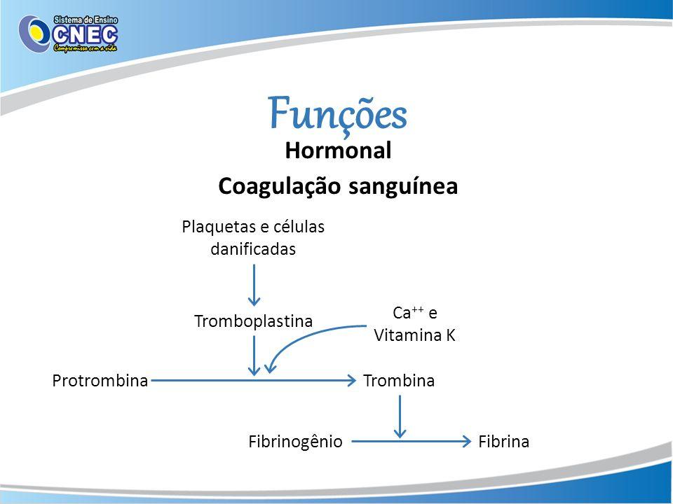 Funções Hormonal Coagulação sanguínea ProtrombinaTrombina FibrinogênioFibrina Tromboplastina Plaquetas e células danificadas Ca ++ e Vitamina K