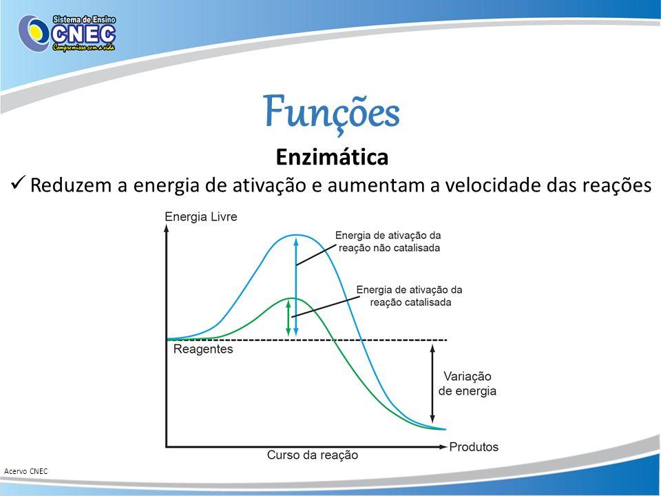 Funções Reduzem a energia de ativação e aumentam a velocidade das reações Acervo CNEC Enzimática