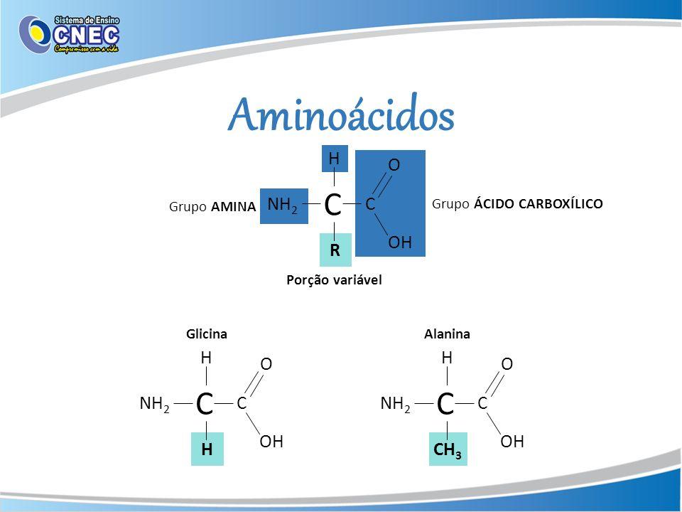 Aminoácidos H R Grupo AMINA Porção variável NH 2 C C O OH Grupo ÁCIDO CARBOXÍLICO H H NH 2 C C O OH H CH 3 NH 2 C C O OH GlicinaAlanina