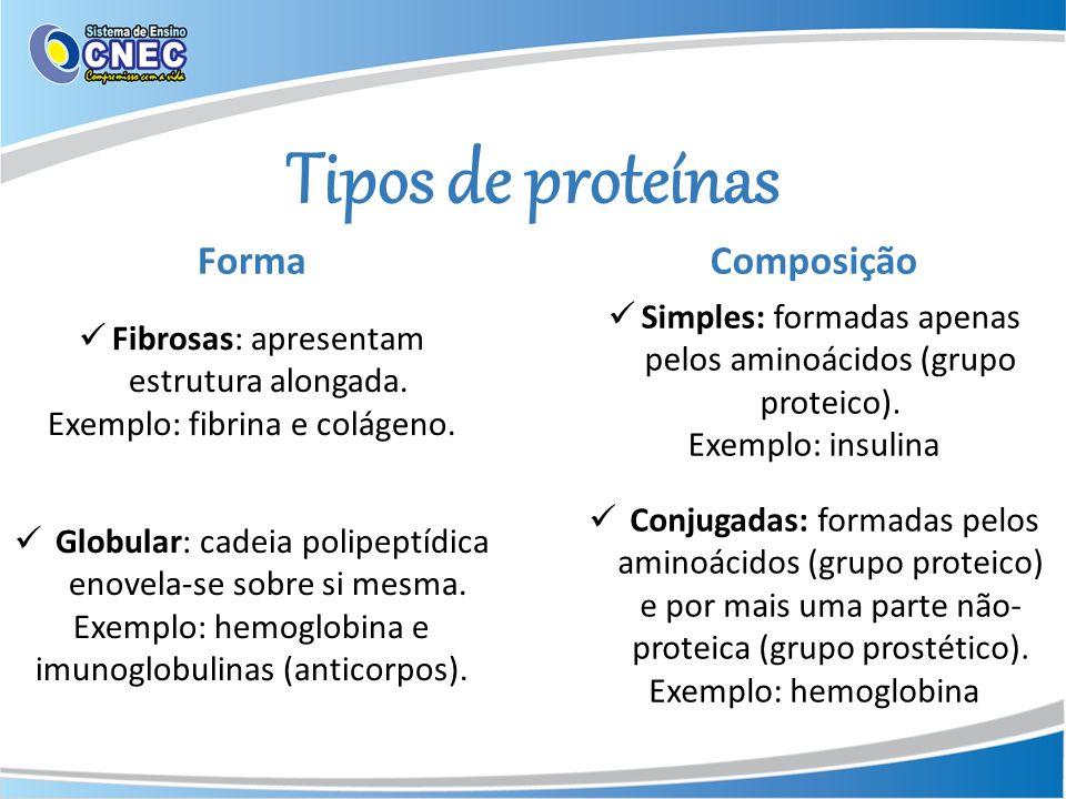 Tipos de proteínas Fibrosas: apresentam estrutura alongada. Exemplo: fibrina e colágeno. Forma Globular: cadeia polipeptídica enovela-se sobre si mesm