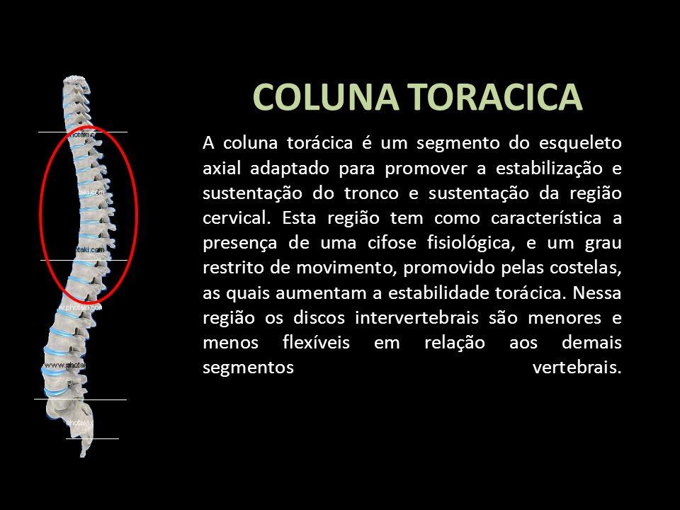 COLUNA TORACICA A coluna torácica é um segmento do esqueleto axial adaptado para promover a estabilização e sustentação do tronco e sustentação da reg