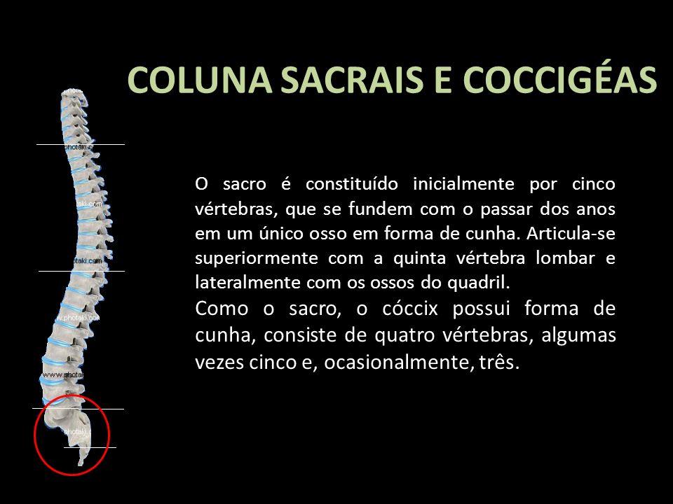 COLUNA SACRAIS E COCCIGÉAS O sacro é constituído inicialmente por cinco vértebras, que se fundem com o passar dos anos em um único osso em forma de cu