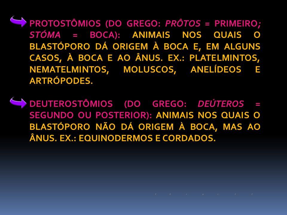 PROTOSTÔMIOS (DO GREGO: PRÔTOS = PRIMEIRO; STÓMA = BOCA): ANIMAIS NOS QUAIS O BLASTÓPORO DÁ ORIGEM À BOCA E, EM ALGUNS CASOS, À BOCA E AO ÂNUS. EX.: P