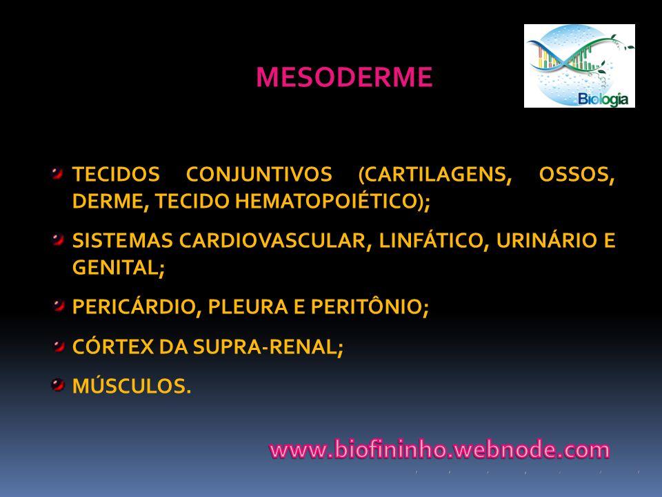 MESODERME TECIDOS CONJUNTIVOS (CARTILAGENS, OSSOS, DERME, TECIDO HEMATOPOIÉTICO); SISTEMAS CARDIOVASCULAR, LINFÁTICO, URINÁRIO E GENITAL; PERICÁRDIO,