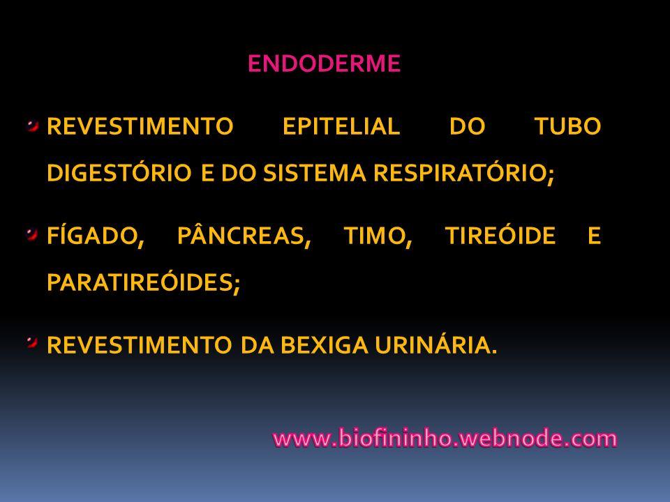 ENDODERME REVESTIMENTO EPITELIAL DO TUBO DIGESTÓRIO E DO SISTEMA RESPIRATÓRIO; FÍGADO, PÂNCREAS, TIMO, TIREÓIDE E PARATIREÓIDES; REVESTIMENTO DA BEXIG